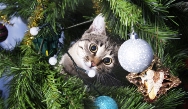 kitten christmas tree 2