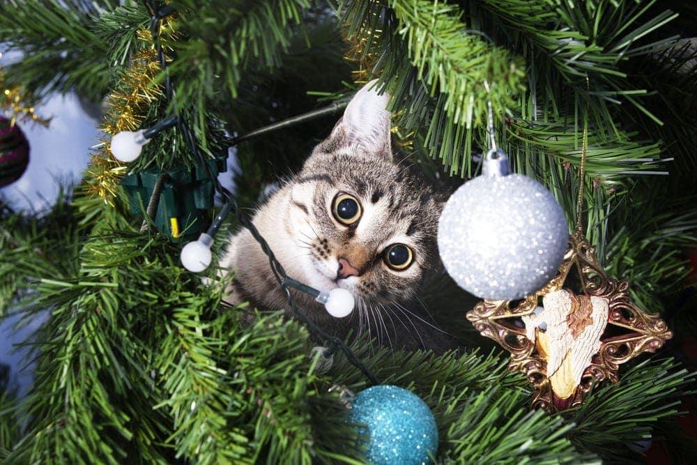 kitten christmas tree 2