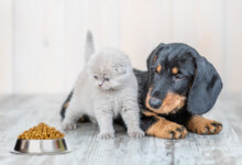 How Much to Feed a New Kitten