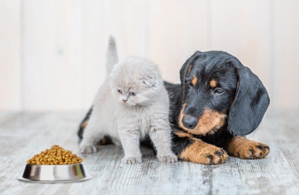 kitten dog food