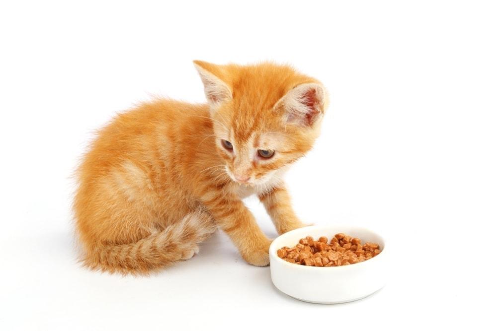 kitten feeding 1