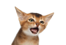 Cat Asthma: Treatments & Causes