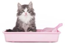 How Often Should You Change Cat Litter?