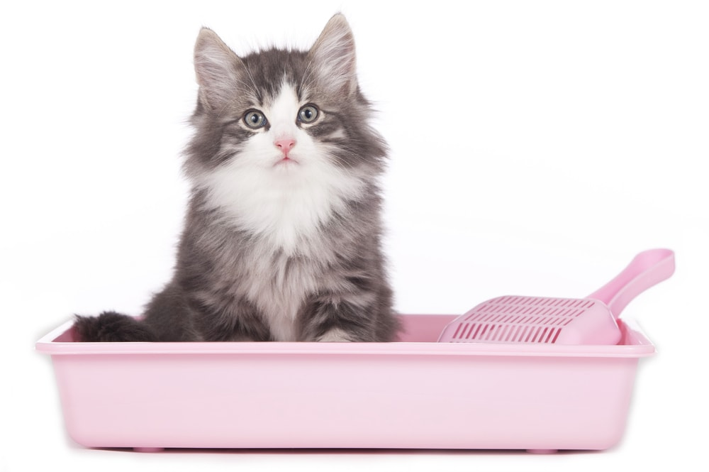 kitten in a litter white background