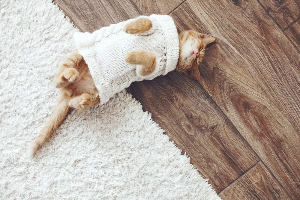 kitten in a sweater sleeps