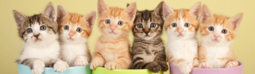 kittens in a cup e1584760794232