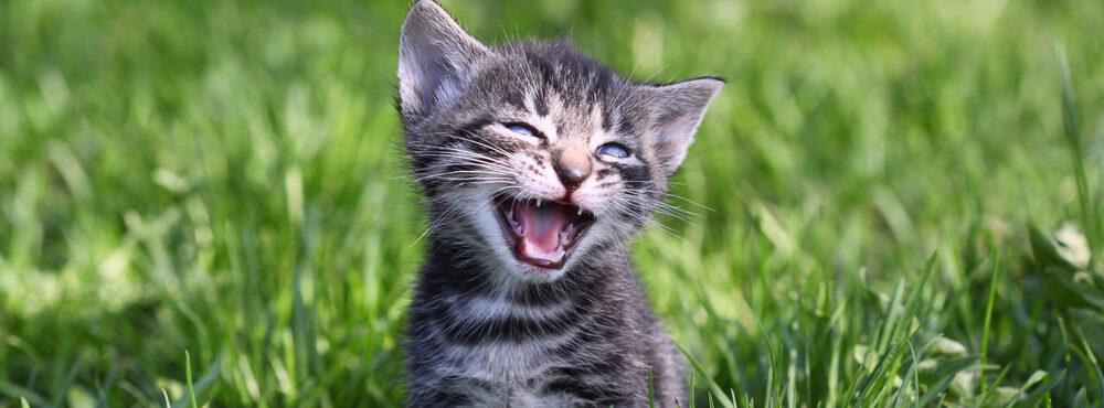 little kitten in a grass e1584716860959