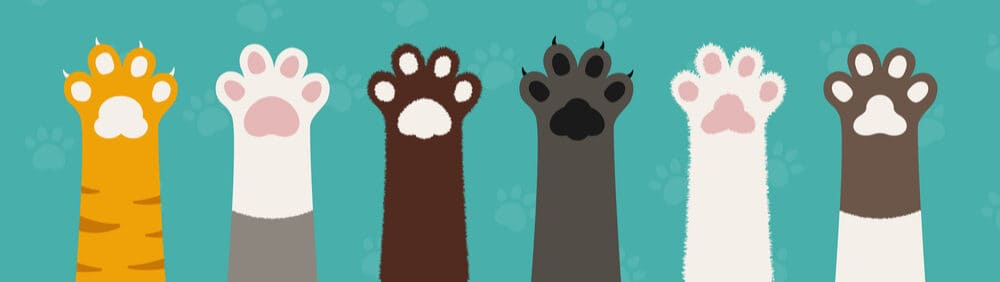 lots of cats paws e1584259418543