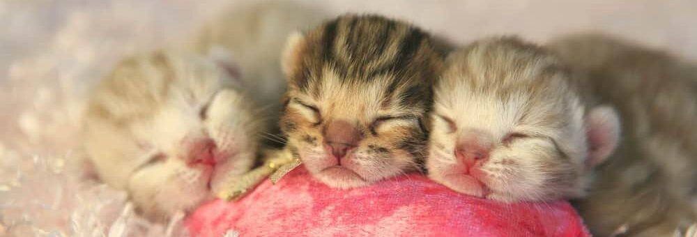 newborn 3 kittens e1584262793645