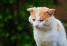 Do Cats Run Away to Die?