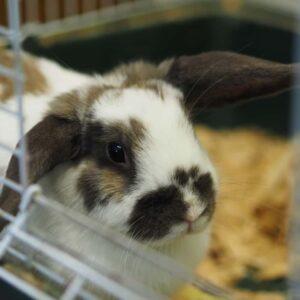 Rabbit Cages - Housing Your Pet Rabbit Indoors