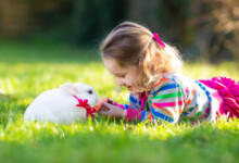 Fun Games to Play With Your Pet Rabbit