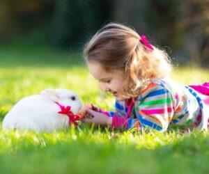 rabbit and kid play