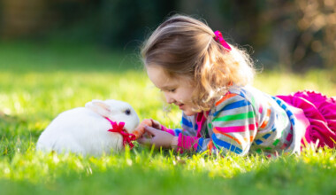 rabbit and kid play