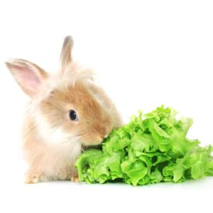 What Do Pet Rabbits Eat? How to Feed Your Bunny