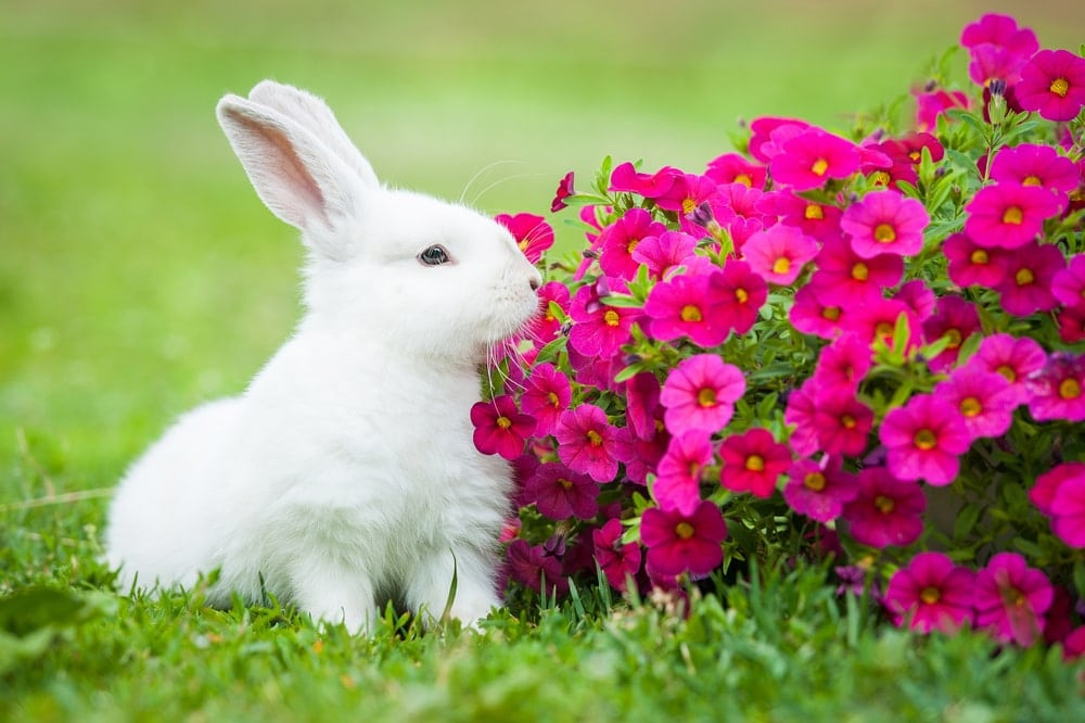 rabbit eating flowers