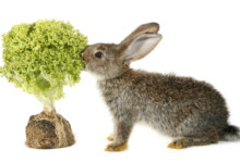 Plants That Are Poisonous to Rabbits
