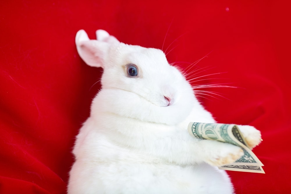 rabbit give money