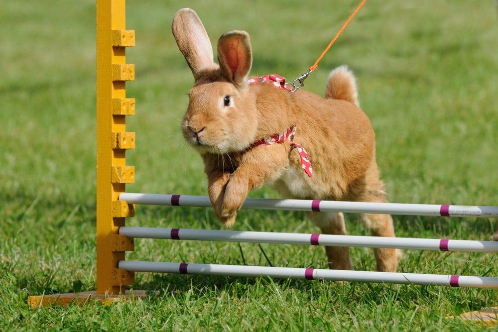 rabbit jump play