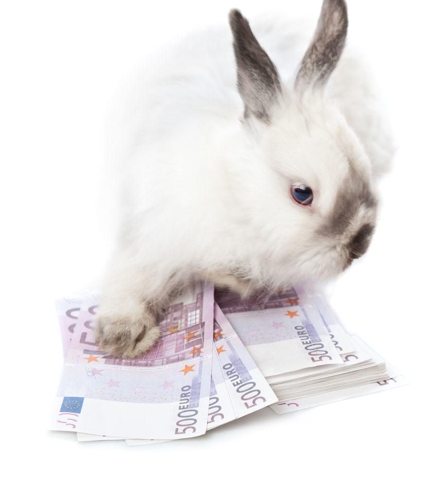 rabbit on euro