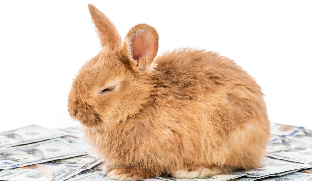 rabbit sitting on dollar 1 e1585393857542