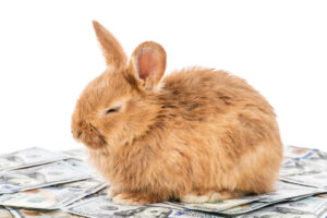 rabbit sitting on dollar