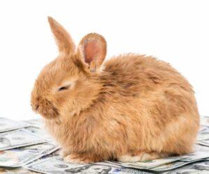 rabbit sitting on dollar