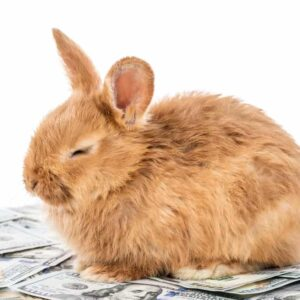 How Much Does A Pet Rabbit Cost to Care For?