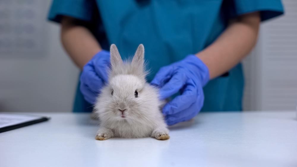 rabbit veterinary