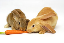 Safe & Good Foods for Pet Rabbits to Eat