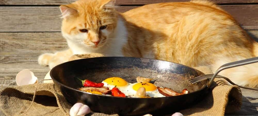 red cat eats fried eggs e1583401652322