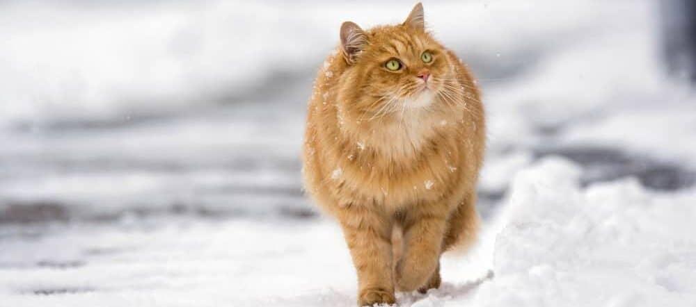 red cat outside e1584761162301
