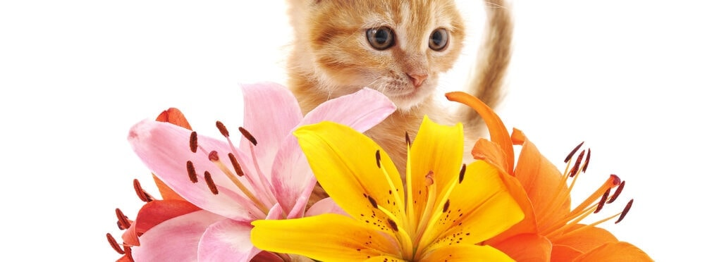 red kitten and lilies e1584773245185