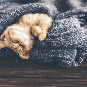 How to Make Your Cat Feel Comfortable at Home