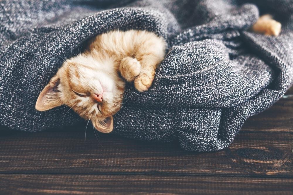 red kitten cute sleeps