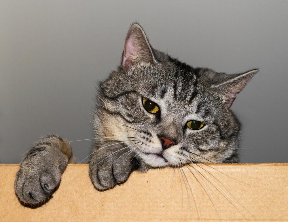 sad cat 2