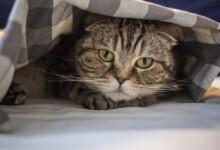 Cat Stress: Treatments & Causes