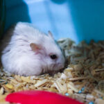 Do Hamsters Get Lonely?