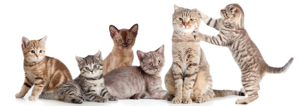 several cats 1 e1584775704913