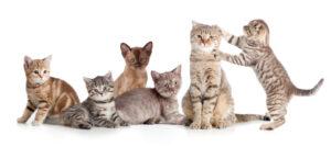 several cats