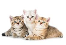 How Do I Choose a Healthy Kitten?
