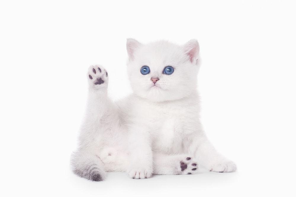 small baby kitten