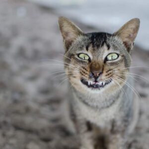 Reasons Why Your Cat is Acting Weird