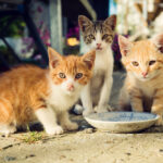 What To Do If You Find a Lost Stray Cat?