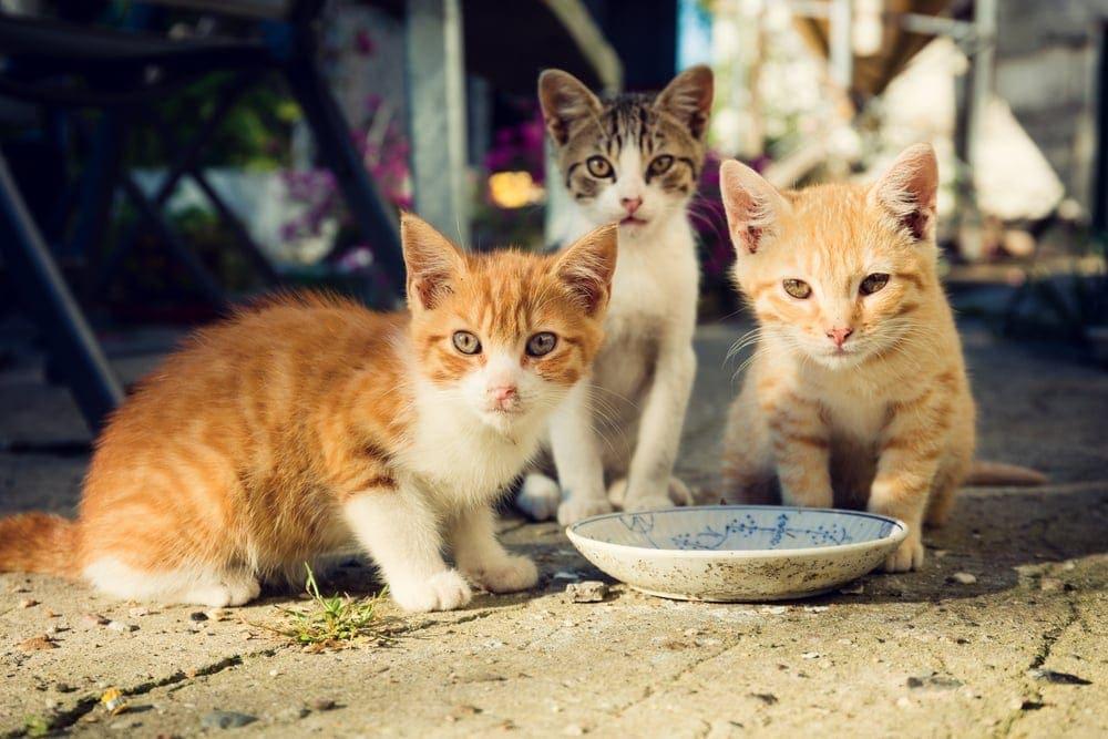 stray kittens eat