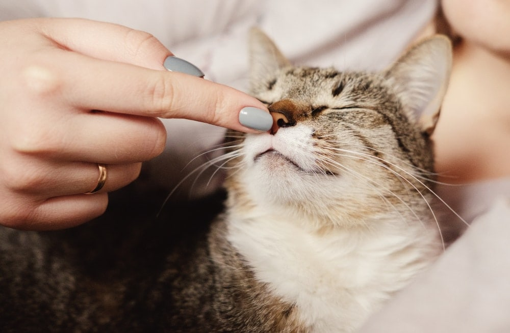 touching cats nose