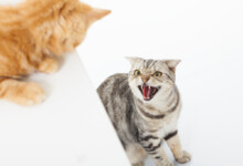 How to Stop a Cat Fight