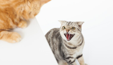 very angry cats