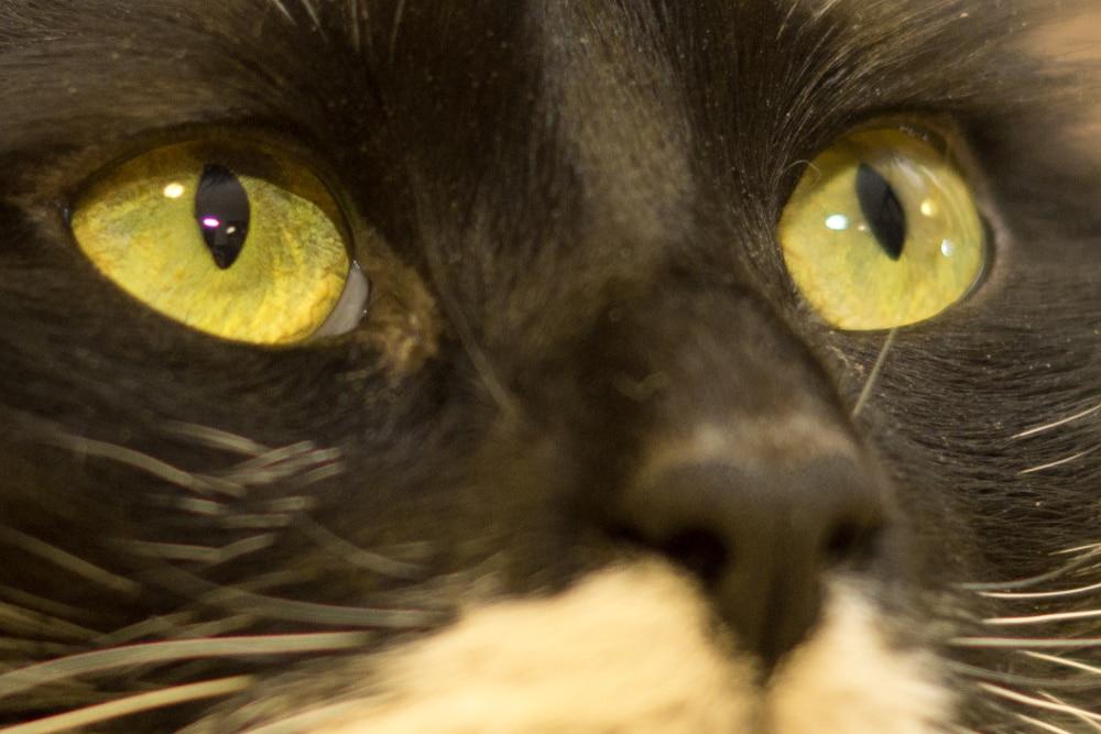 watery cat eyes