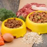 Wet VS Dry Cat Food